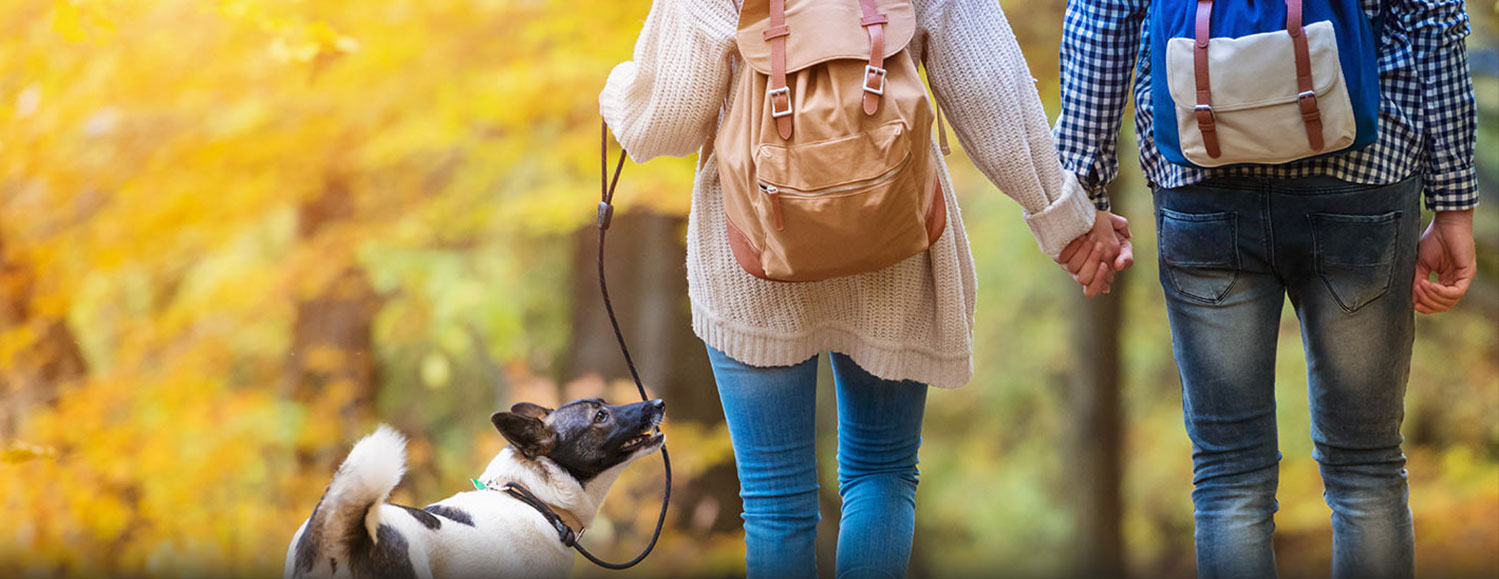 Stem cell therapy for lyme disease: picture showing a couple comfortably walking their happy dog while holding hands.