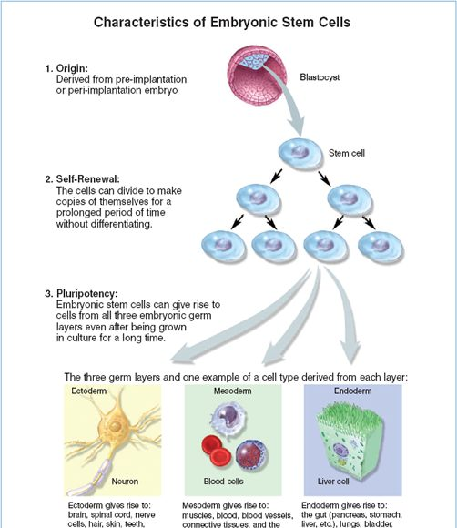 why people want embryonic stem cells
