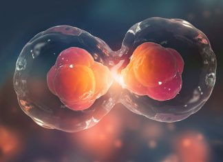 what are stem cells large
